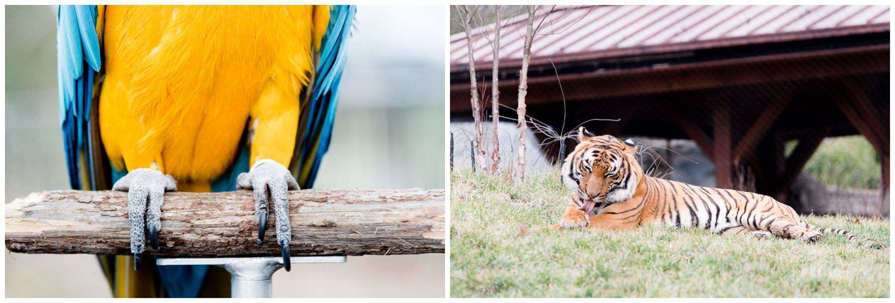 Gibbon Trails & Langur Landing
